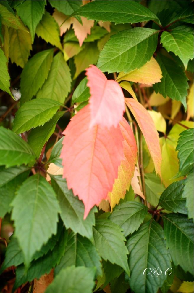 autunno-2
