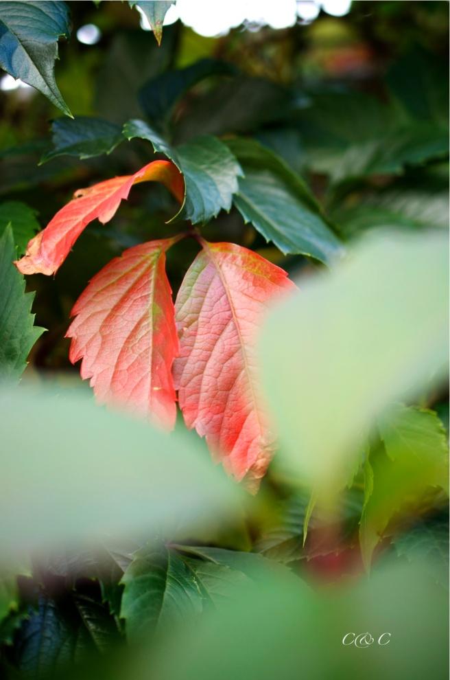 autunno-8